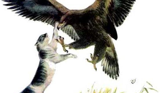 Орёл и кошка — Константин Ушинский