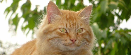 Кот бесстыжий— Роза Финк — читает Павел Беседин